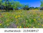 A Texas Field Full Of A Variet...