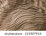 Detail Of Weathered Pohutukawa...