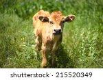 Beautiful Little Calf In Green...
