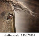 Stock photo eye of horse with mane on dark background 215574034