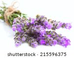 bunch of lavender flowers on a ... | Shutterstock . vector #215596375