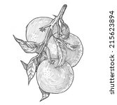 engraving style hatching pen... | Shutterstock . vector #215623894