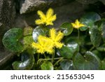 Yellow Water Snowflake Or...