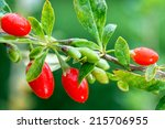 Goji Berry   Twig Filled With...