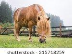 brown pony grazing | Shutterstock . vector #215718259