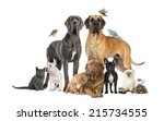 Stock photo group of pets dog cat bird reptile rabbit isolated on white 215734555