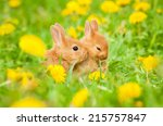 Stock photo two little rabbits sitting in flowers outdoors 215757847
