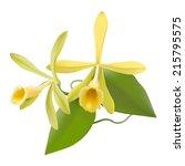 vanilla orchid   vanilla... | Shutterstock .eps vector #215795575