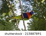 Colorful Rainbow Lorikeet Seen...