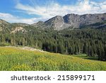 beautiful yellow daisies in a... | Shutterstock . vector #215899171