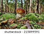boletus edulis edible mushroom... | Shutterstock . vector #215899591