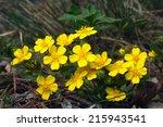 Macro Beautiful Yellow...