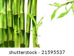 bamboo shoots on white... | Shutterstock . vector #21595537