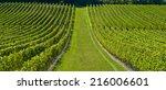 saint emilion vineyard... | Shutterstock . vector #216006601