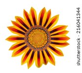 red and yellow flower front... | Shutterstock . vector #216041344