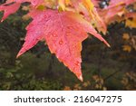 Maple Leaf In Indian Summer