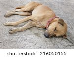 dog sleeping on a bright day   Shutterstock . vector #216050155