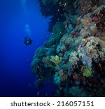 diver explores the soft corals... | Shutterstock . vector #216057151