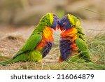 Two Rainbow Lorikeets ...
