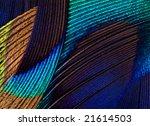 Peacock Feather Pattern Macro