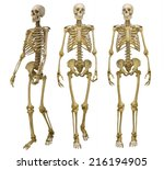 three human skeletons isolated... | Shutterstock . vector #216194905