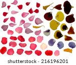 Stock vector illustration with group of flower petals isolated on white background 216196201