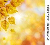 falling autumn birch leaves... | Shutterstock . vector #216253561