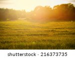Sunset over rural grass field, Sweden  - stock photo