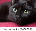 Stock photo portrait of a beautiful black cat at home 216388231