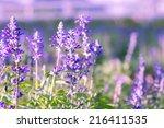 lavender flower  | Shutterstock . vector #216411535