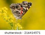 American Lady Butterfly...