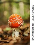 Red Mushroom With White Spots...