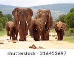 A Herd Of Elephant On The Move...