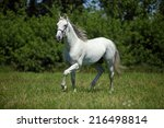 Portrait Of Majestic Andalusian ...