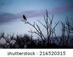 Black Bird Above Branches