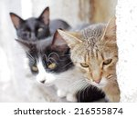 Stray Cats Photographed In...