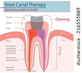 root canal therapy. | Shutterstock .eps vector #216555889