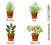collection of herbs in a... | Shutterstock .eps vector #216571885