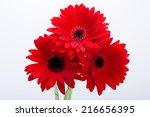 Red Gerbera Daisy Flower