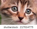 Stock photo cute kitten 217014775