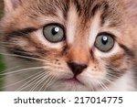 cute kitten | Shutterstock . vector #217014775