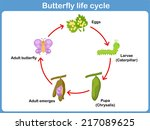 Vector Life Cycle Of A...