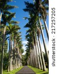 view of palm trees road  | Shutterstock . vector #217257205
