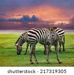 Wild Zebra Standing In Green...