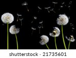 Silhouettes Of Dandelions In...