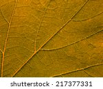 macro of orange leaf | Shutterstock . vector #217377331
