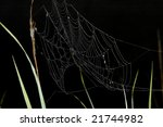 spider web detail against black | Shutterstock . vector #21744982