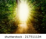forest path in the woods | Shutterstock . vector #217511134