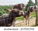 Curious Donkey  Closeup. Reall...