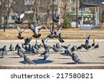 The Group Of Pigeons Arrived O...